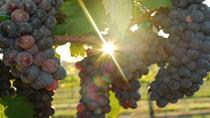 Eagle Wine Tour in Fredericksburg, San Antonio, Wine Tasting & Winery Tours
