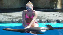 Combination Dolphin and Sea Lion Encounter, Puerto Plata, Swim with Dolphins