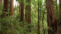 Muir Woods Downhill Hiking Tour, San Francisco, Walking Tours