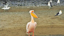 Pelican Point Peninsula Tour, Walvis Bay, Day Trips