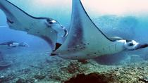 Diving with Manta Rays for Certified Divers from Padangbai Beach, Bali, Scuba Diving