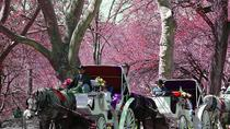 Private Carriage Ride in Central Park, New York City, Horse Carriage Rides