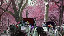 Trajet privé en calèche à Central Park, New York City, Horse Carriage Rides