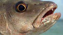 6-hour Boca Raton Inshore Fishing Trip, Boca Raton, Fishing Charters & Tours