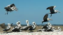 2-Hour Nature Boat Tour with Certified Naturalist, Charleston, Day Cruises