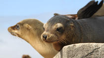 5-Day Galapagos Land and Underwater Adventure, Galapagos Islands, Multi-day Tours