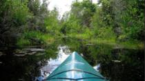 Paddle the Swamp: Canoe and Kayak Louisiana Bayou Tour, New Orleans, Airboat Tours
