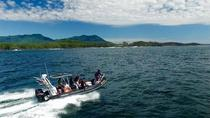 Vancouver Island Whale Watching Tour, Vancouver Island, Dolphin & Whale Watching