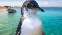 Full-Day Penguin Island & Fremantle Town, Perth, Cultural Tours