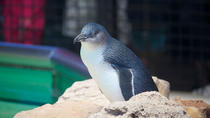 Full-Day Penguin Island & Mandurah Canal Cruise, Perth, Day Cruises