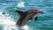 Half-Day Mandurah Canals & Dolphin Watch Tour, Perth, Dolphin & Whale Watching