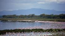 Full-Day Lake Nakuru National Park Private Tour from Nairobi, Nairobi
