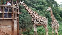 Out of Africa Tour: Giraffe Centre and Karen Blixen Museum from Nairobi, Nairobi, Day Trips