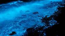 Private Luxury Bioluminescence Tour and Dinner at Kaibo, Cayman Islands, Private Sightseeing Tours