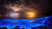Private Luxury Boat Bioluminescence Tour, Cayman Islands, Cultural Tours