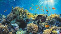 Snorkel Safari Jet Ski Tour, Cayman Islands, Snorkeling