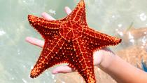 Stingray City and Starfish Beach Tour, Cayman Islands, Ports of Call Tours