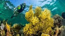 Snorkeling Adventure at Puerto Morelos National Reef Park with Lunch and Open Bar, Playa del ...
