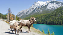 Summer Tour: Banff and its Wildlife, Banff, Hiking & Camping