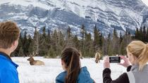 Winter Tour: Banff and its Wildlife, Banff, Half-day Tours