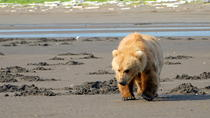 Alaska Bear Viewing Day Tour by Air, Homer, Air Tours