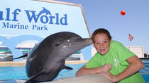 Dolphin Meet and Greet at Gulf World Marine Park, Panama City Beach, Swim with Dolphins
