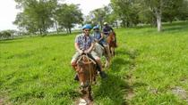 Full-Day Punta Cana Trip Including Horseback Ride, Punta Cana, Day Trips