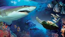Aquaria KLCC Admission Ticket & Free Kuala Lumpur City Tour, Kuala Lumpur, Nature & Wildlife