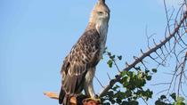 Bird Watching in Udawatte Kele, Kandy From Negombo, Negombo, Day Trips