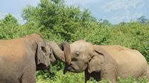 Day Trip to Udawalawe From Colombo (Transfer only), Colombo, Day Trips