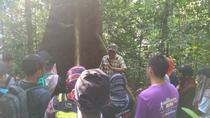 Forest Research Institute Malaysia (FRIM) Nature Trekking from Kuala Lumpur, Kuala Lumpur, 4WD, ATV...