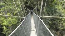 Kinabalu Park & Poring Hot Springs Tour From Kota Kinabalu, Kota Kinabalu, Day Trips