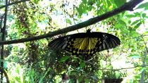 KL Butterfly Park Admission Ticket & Free Kuala Lumpur City Tour, Kuala Lumpur, Attraction Tickets