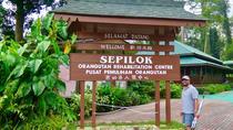 Kota Kinabalu Full day Sepilok Orang Utan Sandakan Nature City Tour, Kota Kinabalu, Day Trips