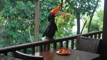 Kuala Lumpur Bird Park Tour With Transfer, Kuala Lumpur, Cultural Tours