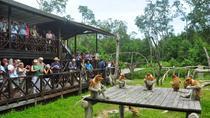 Labuk Bay Proboscis Monkey Sanctuary Admission Ticket, Sandakan, null