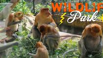 Lok Kawi Wildlife Park Tour From Kota Kinabalu, Kota Kinabalu, Nature & Wildlife