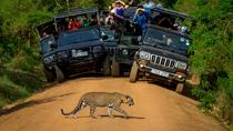 Private 02 Day Leopard Safari in Yala from Bentota, Colombo, Multi-day Tours