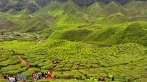 Private Full-Day Cameron Highlands Nature Tour from Kuala Lumpur, Kuala Lumpur, Private Sightseeing ...