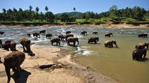 PRIVATE PINNAWALA & KANDY DAY TOUR From COLOMBO, Colombo, Day Trips