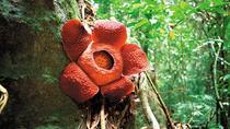 Sarawak Gunung Gading National Park Tour, Kuching, Attraction Tickets