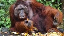 Sarawak Semenggoh Wildlife Centre Tour, Kuching, Cultural Tours