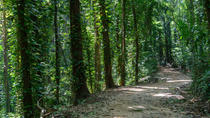 Visit To Udawatte Kele Forest, Kandy From Bentota, Bentota, Day Trips