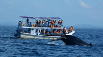 Whale watching in Mirissa from Beruwela & Bentota, Bentota, Day Trips
