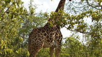 4 Days Magical Kruger National Park Safari with Panorama Tour, Johannesburg, Multi-day Tours