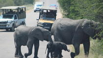 Kruger National Park 2 Days 1 Night Magical Safari from Johannesburg, Johannesburg, Overnight Tours