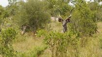 Kruger National Park 3 Days 2 Nights Classic Safari from Johannesburg, Johannesburg, Multi-day Tours