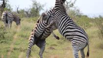 Kruger National Park 3 Days 2 Nights Classic Safari from Johannesburg, Johannesburg, Multi-day Tours