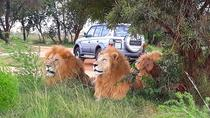 Lion Park Half-Day Tour from Johannesburg, Johannesburg, Half-day Tours