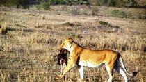 Nairobi National Park Day Tour, Nairobi, Nature & Wildlife